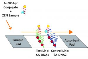 competitive aptamer LFA